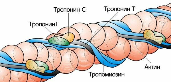 Инфаркт миокарда пульс