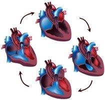 Левожелудочковая сердечная недостаточность: Причины