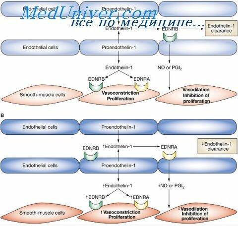 Медикаментозная помощь при артериальной гипертензии