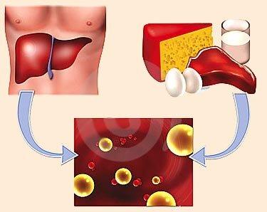 Высокий уровень холестерина в крови норма