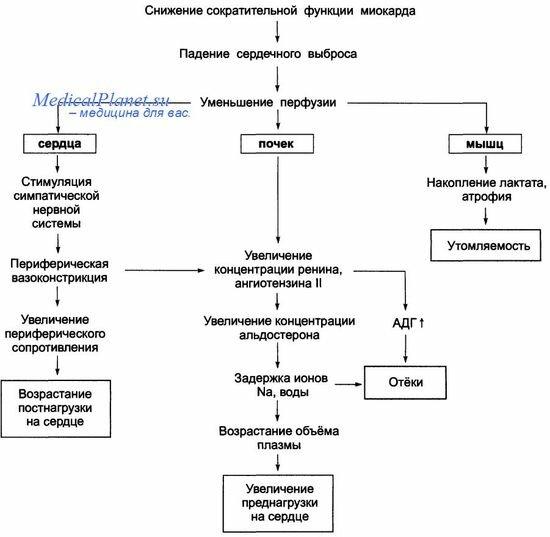 Патогенез хронической сердечной недостаточности схема